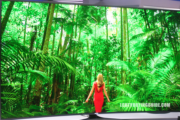 OLED TV vs  4K LED UHD TV